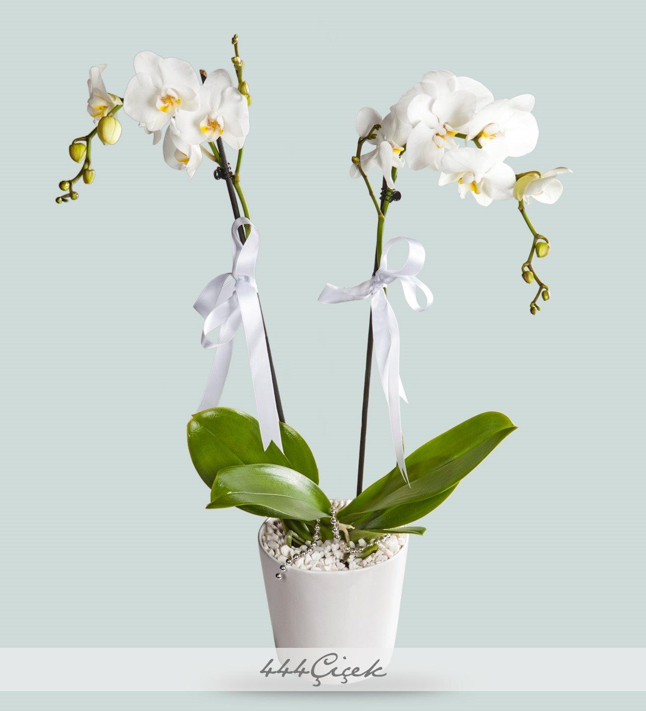 Seramik Vazoda 2 Dal Phalaenopsis Orkide